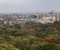 "Aarey ""forest"" has fired-up Mumbai poll scene"